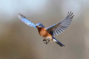 Por-que-vuelan-las-aves-2