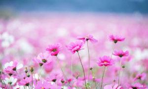 arreglos-florales-por-internet-texto1